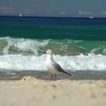 Sea Bird on the Beach